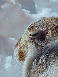 400_zoomed_wabbit_different_shot.JPG