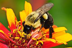 Feeding_Bee.jpg