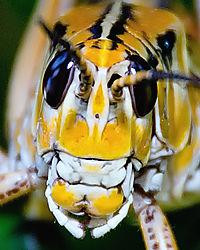 Grasshopper6.jpg