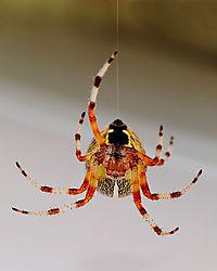 Spider_D3S8755.jpg