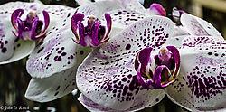 John_D_Roach--Orchid.jpg