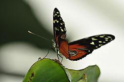 butterfly35.JPG