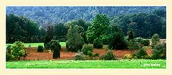 12017Abandoned-Pasture.jpg