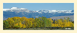 Fence-and-Aspens-Pano.jpg