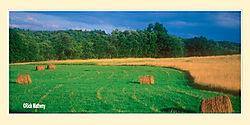Hay-Rolls1.jpg