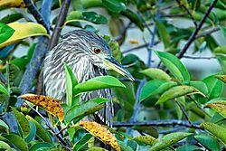 WakodahatcheeWetlands_2011-10-09_0249.jpg