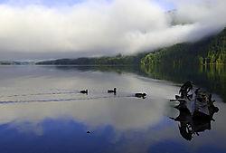Ducks21.jpg