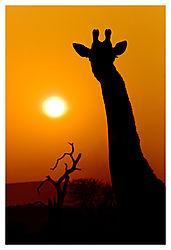 African_Sunrise.jpg