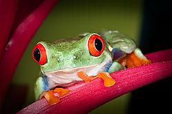 Frog12Fl.jpg