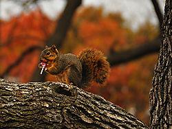 Squirrel_enjoying_Treat.jpg