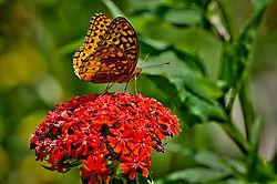 butterfly45.jpg