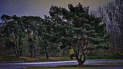 tree_hd