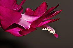 Flower_024.JPG