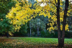 Windiger2_Herbst-036-DSC_3205.jpg