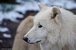 Zoo_Tiere-353-DSC_0736.jpg