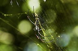 nik_Tiger_Spider_MEX8898_1_of_1_.jpg