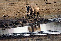 Africa-2007--1288_Medium_.jpg
