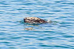 2013_01_30_whale-0874.jpg
