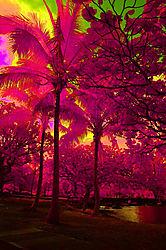 HILO_HAWAII.jpg