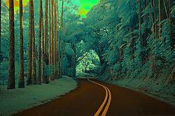 Hilo_Rain_Forest.JPG