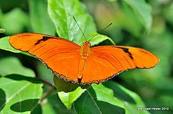 DSC_0162_S_B_Butterflies_Alive_2.jpg
