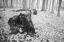 forest_loven_7_of_8_.jpg