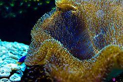 Aquarium-076-_D7K2738.jpg