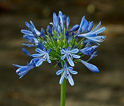 Blue_Flower_10.jpg