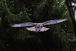 Spirit_Hawk-1.jpg