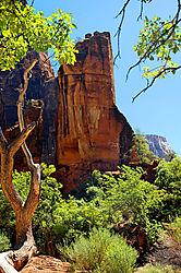 Zion_Tower.jpg