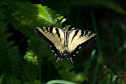 Butterfly40.jpg