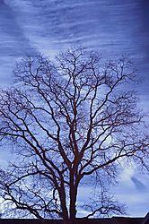 Blockbuster_tree.jpg