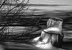 Stump_in_winter-IR-BW.jpg