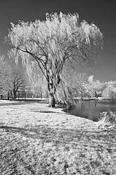 gallup_TreeIR_4-24-2011.jpg