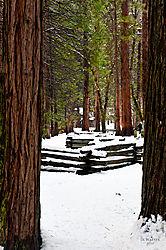 1102_Yosemite_Day2_144.jpg