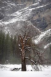 1102_Yosemite_Day2_173.jpg