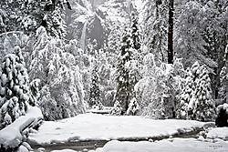 1102_Yosemite_Day3_011.jpg