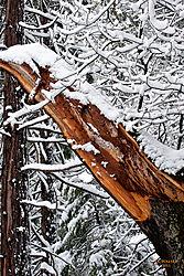 1102_Yosemite_Day3_044_Vjkw.jpg