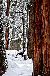 1102_Yosemite_Day3_148_Vjkw.jpg
