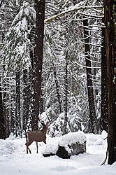 1102_Yosemite_Day3_176-Edit.jpg