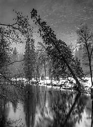Angled_Tree_Yosemite2.jpg