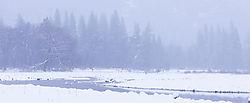 Merced_River_Yosemite_copy.jpg