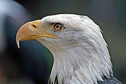 Adler-1.jpg