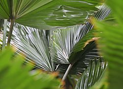 palm_abstract2.jpg