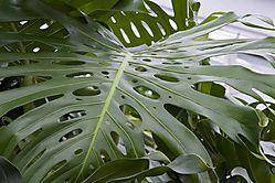 shiny_leaf.jpg
