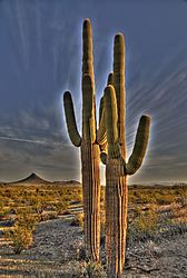 HDR-COOLOGE_CACTUS-small.jpg
