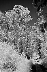 RolleiInfrared_33a_040615_Baindter_Wald_web.jpg