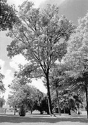 SFX200_35_210612_FN_Promenadenpark_weeb.jpg