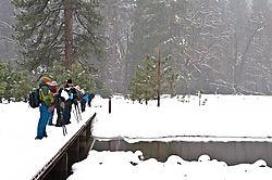 1102_Yosemite_Day1_050.jpg