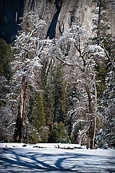 1102_Yosemite_Day4_101_Vjkw.jpg